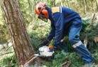 Adams Estate Tree cutting services 21